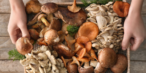 My Favourite Mushroom Recipes