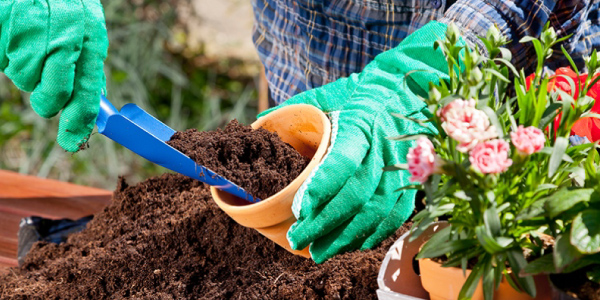 gardening-brings-coporate-health