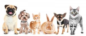 gp-clinics-melbourne-and-pet-stories